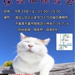 稲ねこ 保護猫譲渡会 仔猫祭りです!