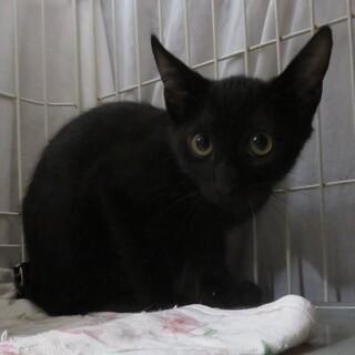 黒猫きょうだい金ちゃん、医療しつけ済