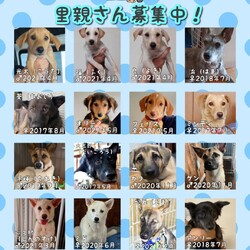 DOG WILL@譲渡会&しつけ教室 サムネイル3
