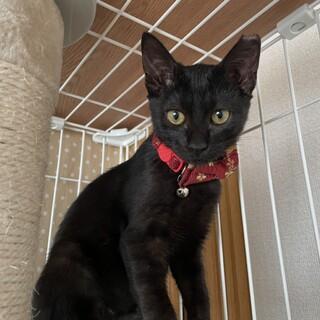 元気で懐こい 黒猫ふうちゃん