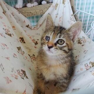 【動画】人も猫も大好きな女の子☆生後3か月