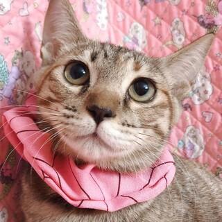 【9/19東日本橋】麦わらの女の子♡エブリちゃん