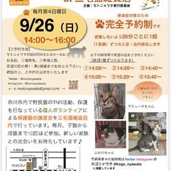 9/26(日)保護ねこ譲渡会 at 三毛猫雑貨店