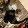 姉妹猫 生後5ヶ月