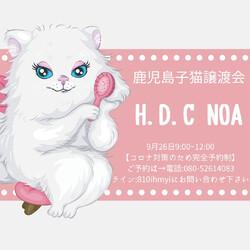 鹿児島子猫譲渡会/Noa