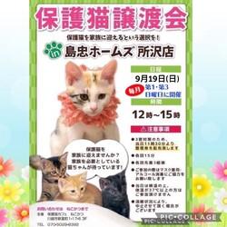 9/19(日) 島忠所沢店譲渡会!
