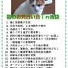 TVでお馴染みの猫のチグちゃん主催のお見合い会