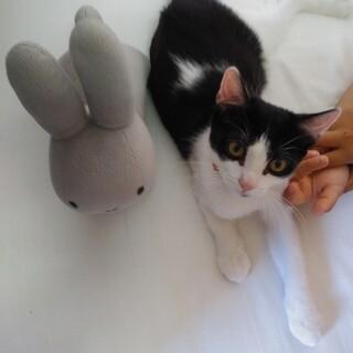 かわいい子猫ちゃんの里親を探しています。