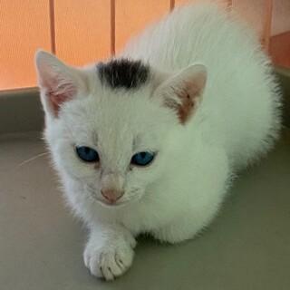 青い目がチャーミングなサラちゃん