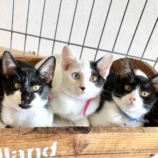川崎より 仲良し子猫姉弟3匹♪