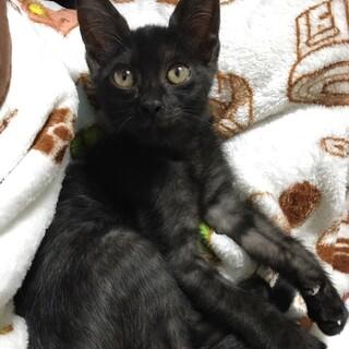 黒い子猫「りー君」