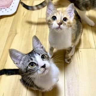 人が大好き!可愛い子猫姉妹
