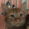 シッポがふわふわの可愛い子猫です