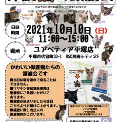 保護猫の譲渡会*Happy Halloween