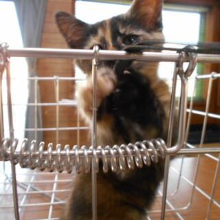 不思議な模様のサビ猫ちゃん