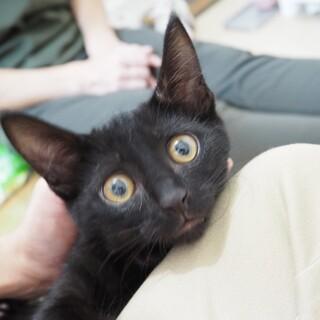 甘えん坊の黒猫子猫さん♪