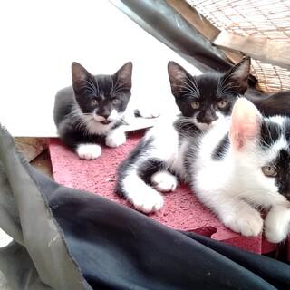 人懐っこい子猫たち(愛知県豊橋市でお引渡し)
