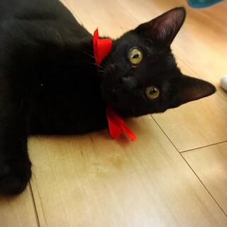 人間大好き!黒猫ちゃん
