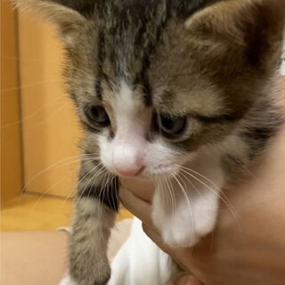 困り顔の子猫ちゃん