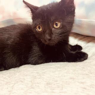 黒猫女の子、ネネちゃん