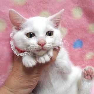 なれなれ♪白猫★アリスちゃん 2ヵ月弱