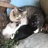 黒猫、白猫の赤ちゃん 里親さん募集中