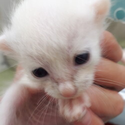 保護猫の譲渡会 子猫&大人猫