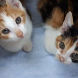 保護猫の譲渡会 子猫&大人猫 サムネイル3