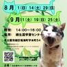 名古屋市緑区猫の譲渡会