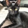 抱っこ大好き!人懐こい黒猫ミミちゃん♀