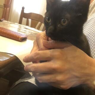 奇跡の子猫 黒丸!