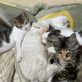 あいちゃん、ねね君、なな君3兄妹です。