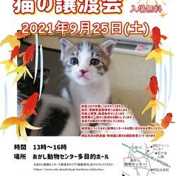 明石【譲渡会】猫まみれwithあかしっぽ 第4回