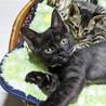 ヒザ乗り猫。甘えん坊の黒猫女子。初期医療ケア済。