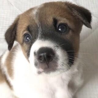 MIXの子犬の女の子えびちゃん