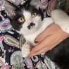 甘えん坊なチョビ髭♂子猫テン君