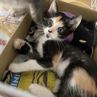 かわいい三毛猫ちゃん❤️