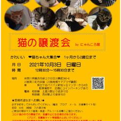 猫の譲渡会 by にゃんころ隊
