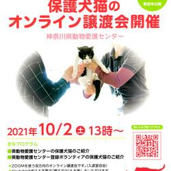 神奈川県動物愛護センターによる保護犬猫のオンライン譲渡会 サムネイル1