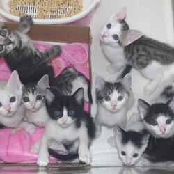 神奈川県動物愛護センターによる保護犬猫のオンライン譲渡会 サムネイル3