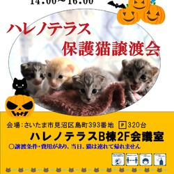 10/16(土)ハレノテラス保護猫譲渡会 サムネイル1