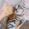 猫見知りナシෆ⃛リンタローくん