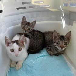保護猫の譲渡会(ねこの歩添道さんの主催の譲渡会) サムネイル2