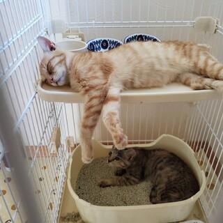リリースされた漁港の子猫たち