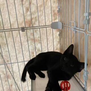 可愛い〰幸運の黒猫ちゃん 男の子