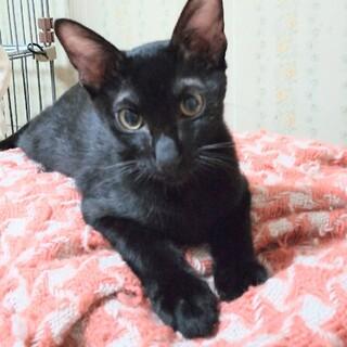 4ヶ月半 黒猫 心優しい カンくん