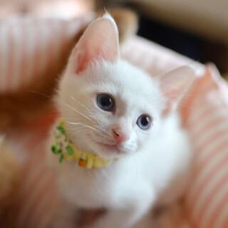 ブルーの瞳がキレイな美少年♪