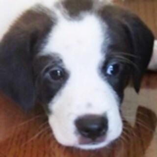 保護犬ナンバーD1512 中型犬ミックス子犬♂