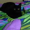 ♪可愛い黒猫♪
