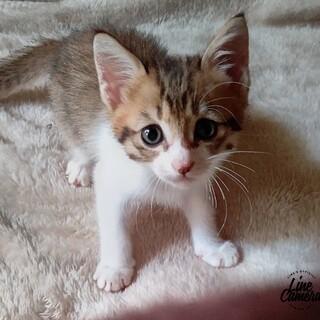 9/23〜9/26子猫だけのミニミニ譲渡面談会